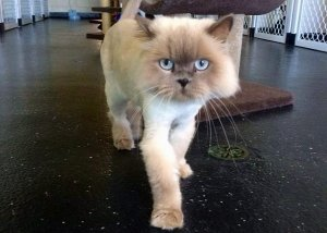 Grr! I'm a Lion!
